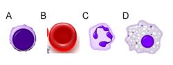 komorki krwi