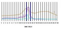 hormony cyklu