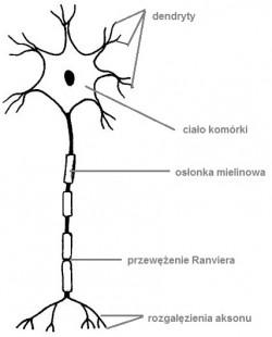 neuron-odpowiedz