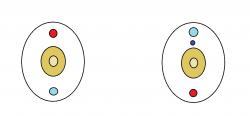 przekroj-poprzeczny-cialo-strunowca-i-bezkregowca